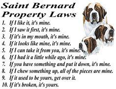 How is a saint bernard s dick