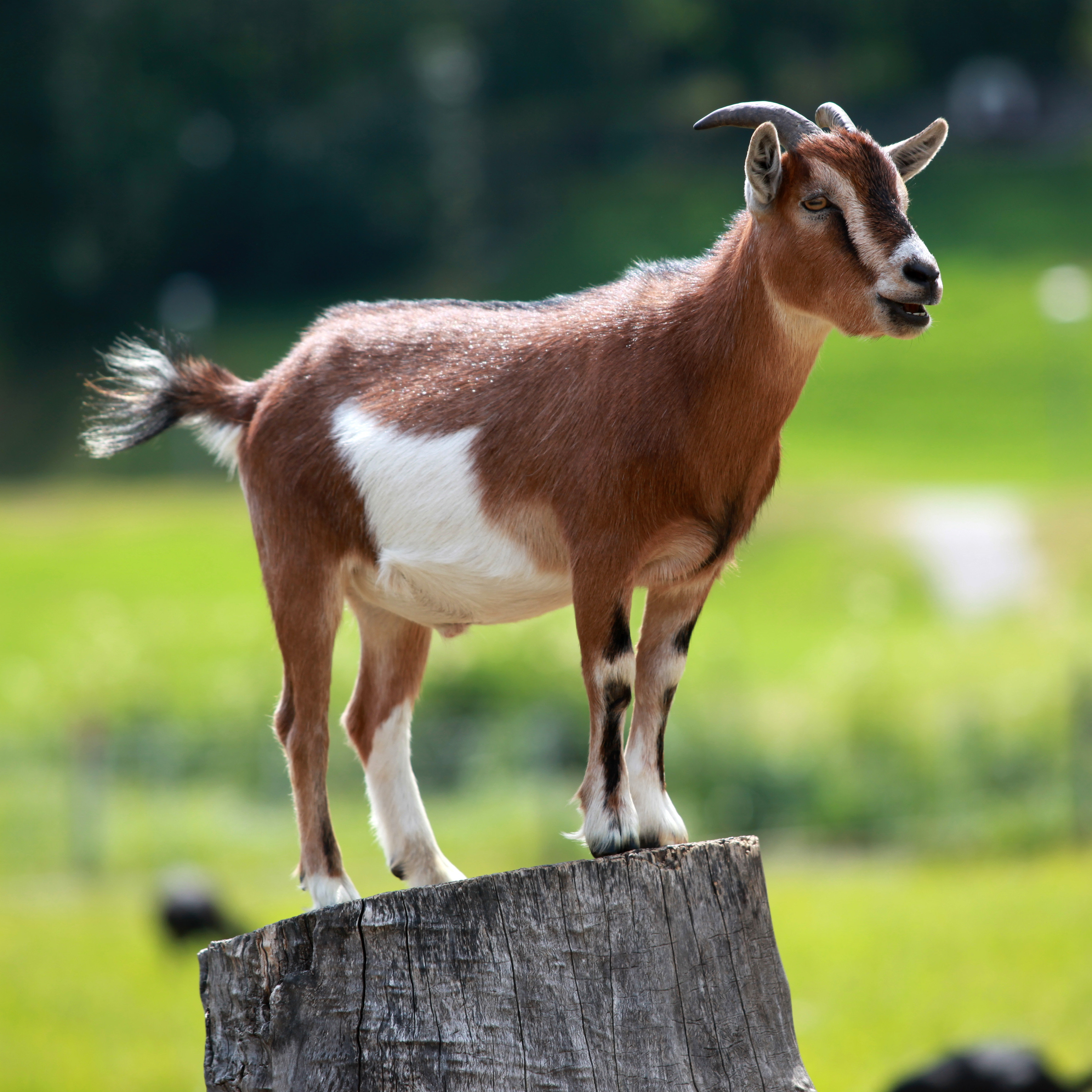 Live sex between goat and woman free