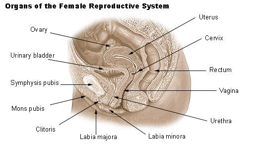 Can i use nair on my vagina