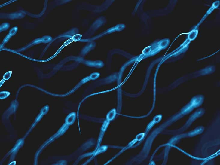 How long can sperm live in vagina