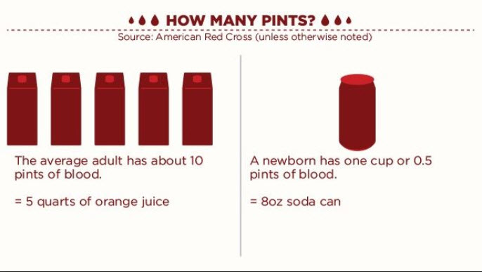 How much blood does an adult have