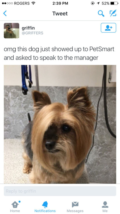 Can i speak to the manager haircut