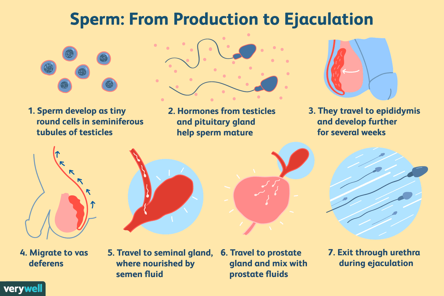 How to create spirm without having sex
