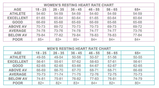 What is the normal adult heart rate