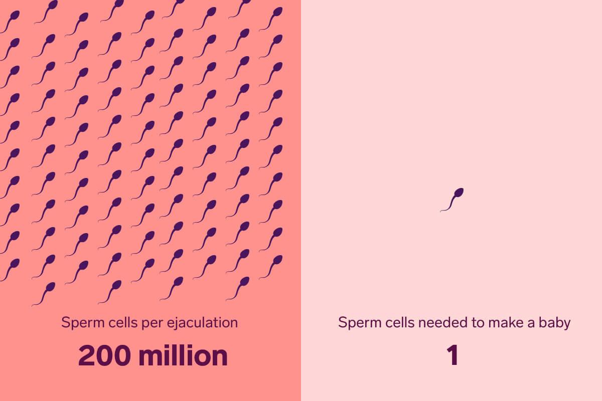 How long for sperm to reach egg