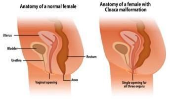 Cosa dicono le donne del sesso anale