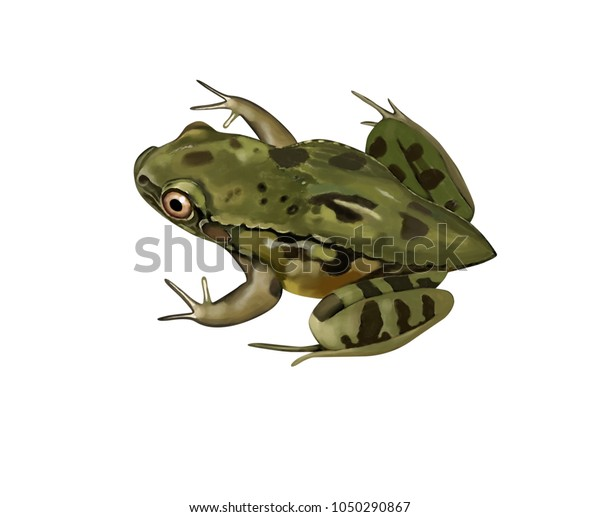 A cartoon picture of a adult frog