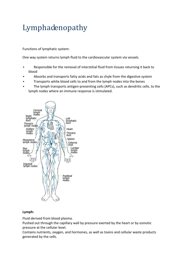 Lymphoid organ where t cells mature crossword