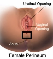 The skin between the vagina and anus